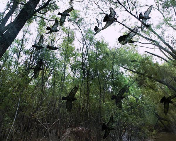 Birds Poster featuring the digital art Spirit Flight by Yvonne Emerson