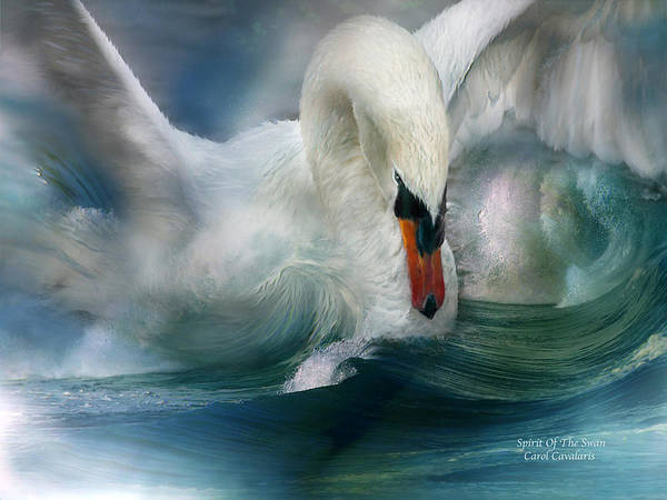 Swan Poster featuring the mixed media Spirit Of The Swan by Carol Cavalaris