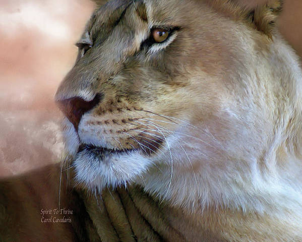 Lion Poster featuring the mixed media Spirit To Thrive by Carol Cavalaris
