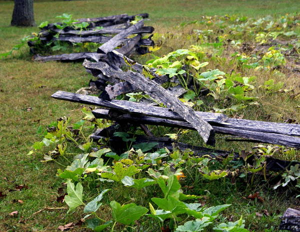 Landscape Poster featuring the photograph Split Rail by Marty Koch