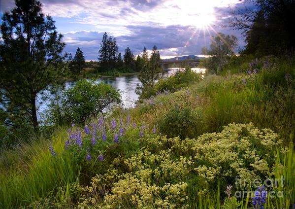 Landscape Poster featuring the photograph Spokane River Wildflowers by Idaho Scenic Images Linda Lantzy