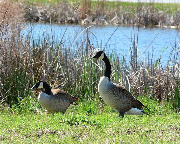 Spring In The Wetlands Poster featuring the photograph Spring In The Wetlands by Maria Urso