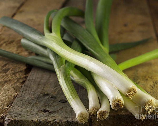 Onion Poster featuring the photograph Spring Onions by Julie Woodhouse