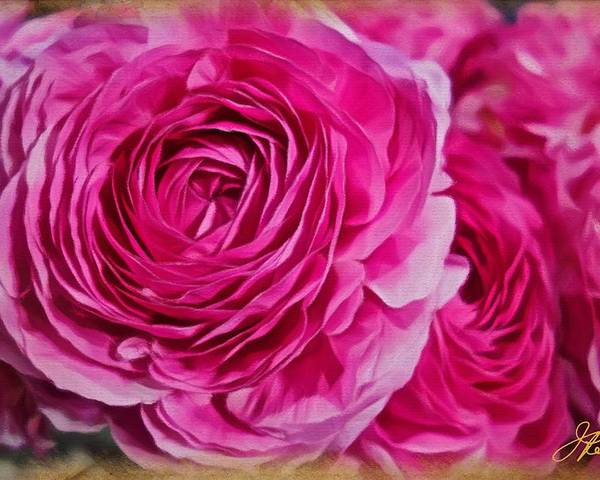 Pink Roses Poster featuring the painting Spring Pink Roses by Joan Reese