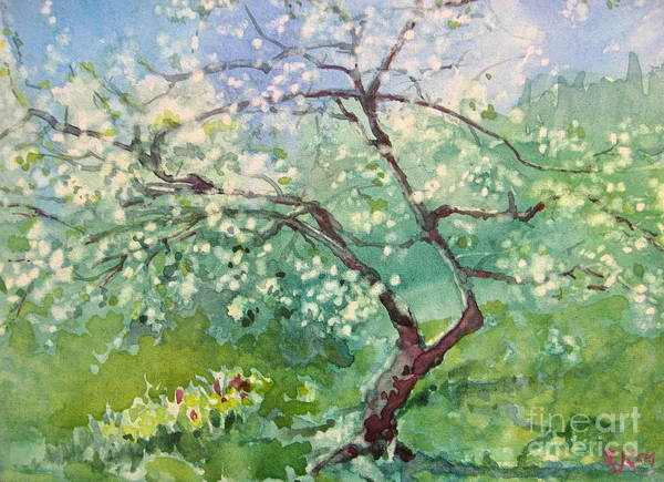 Plum Tree Poster featuring the painting Spring Plum by Elizabeth Carr