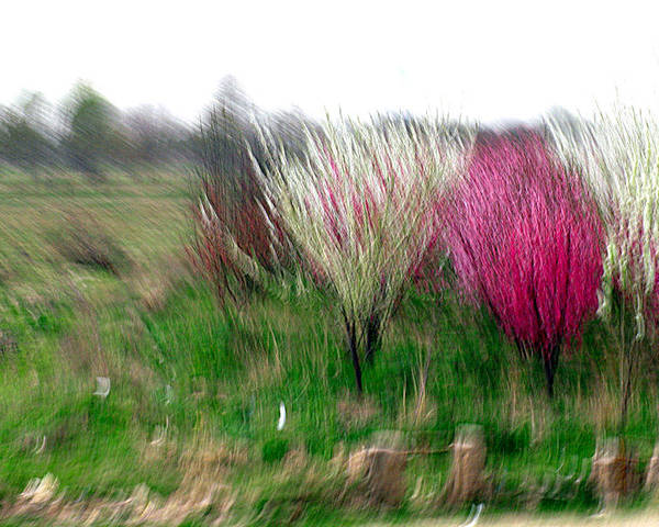 Trees Poster featuring the photograph Spring Smell by Robert Shahbazi
