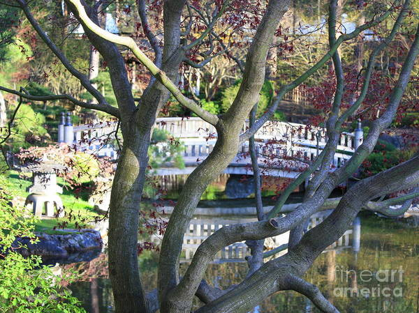 Japanese Garden Poster featuring the photograph Springtime Bridge Through Japanese Maple Tree by Carol Groenen