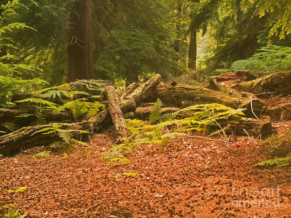 Landscape Poster featuring the photograph Spruce Logs Leith Hill Surrey 2014 by Simon Kennedy