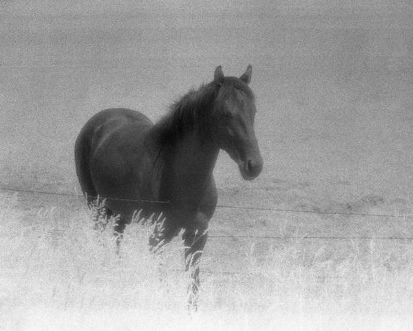 Black And White Poster featuring the photograph Standing Horse by Lyle Crump