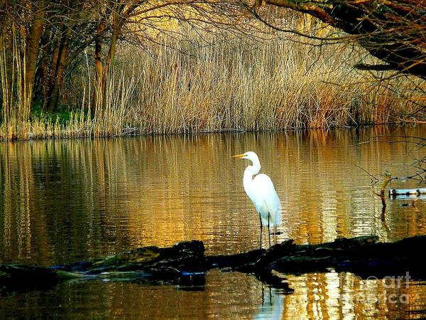 Egret Poster featuring the photograph Standing On Shakey Ground by Kendall Eutemey