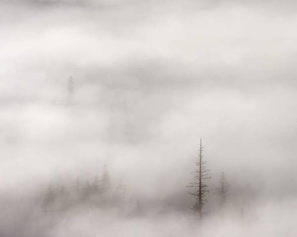 A Few Tall Trees Standing Tall Among The Rising Mist And Fog Of A Crisp October Morning In Th Wenatchee National Forest In Washington Poster featuring the photograph Standing Tall by Mike Dawson