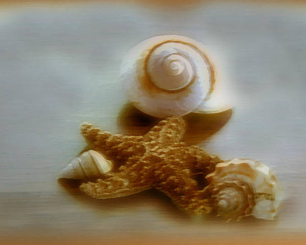 Beach Art Poster featuring the photograph Star And Shells by Linda Sannuti