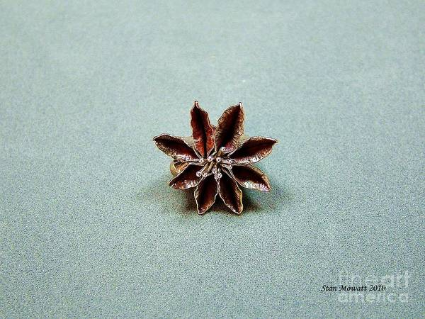 Pendant Poster featuring the photograph Star Flower by Stan Mowatt