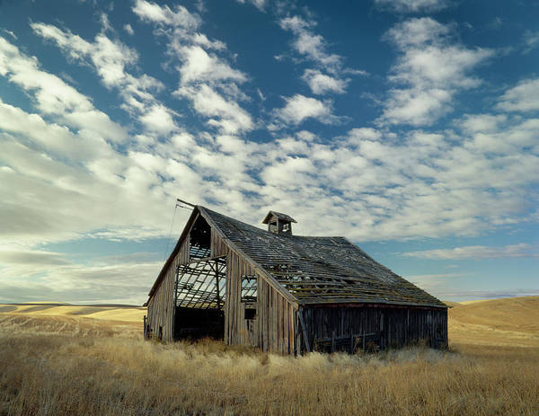 Palouse Poster featuring the photograph Steadfast On Little Alkali Flat by Jerry McCollum