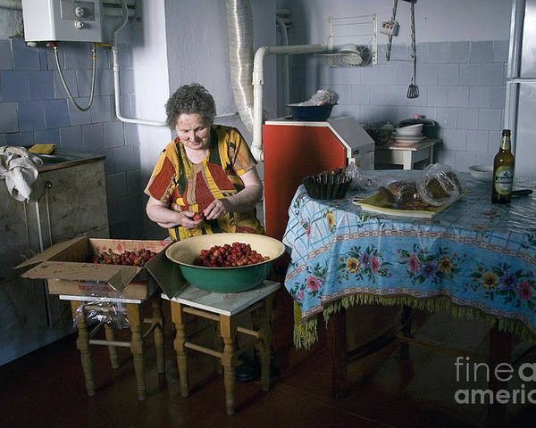 Ukraine Poster featuring the photograph Stefania Cleans Strawberries In Chortkiw Ukraine by Yuri Lev