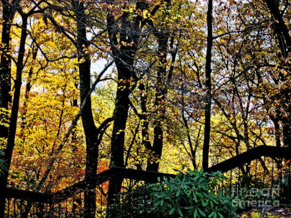 Fall Poster featuring the photograph Steps by Beebe Barksdale-Bruner