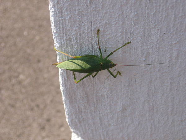 Green. Geen Bug Poster featuring the photograph Stopping By by Sandra Winiasz