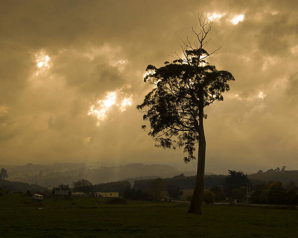 Landscape Storm Rain Trees Light Poster featuring the photograph Storm Over Wilmot by Sarah King