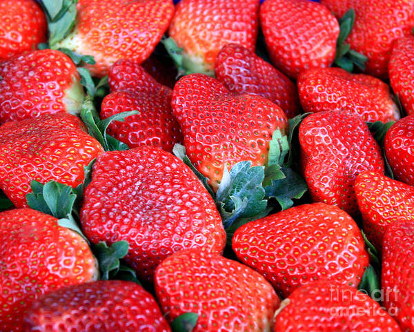 Strawberries Poster featuring the photograph Strawberries 8 X 10 by Carol Groenen