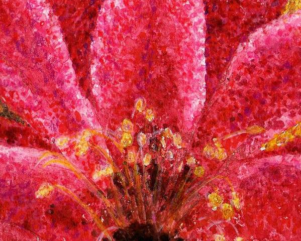 Watercolor Poster featuring the painting Strawberry Hedgehog Cactus Blossom by Cynthia Ann Swan