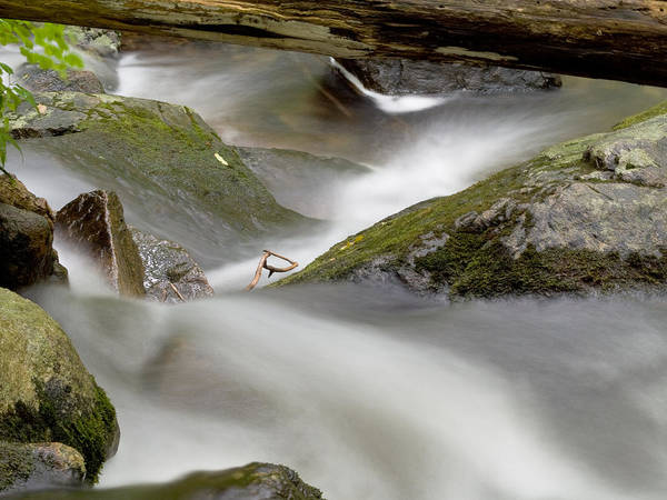 Stream Poster featuring the photograph Stream In Motion by Jim DeLillo