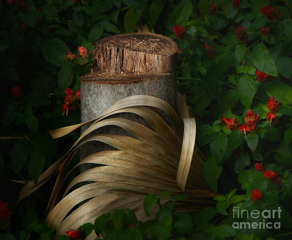 Stump Poster featuring the photograph Stump And Frond by Mike Nellums