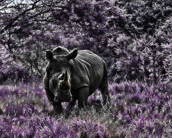 Rhino Poster featuring the photograph Styled Environment-the Modern Trendy Rhino by Douglas Barnard