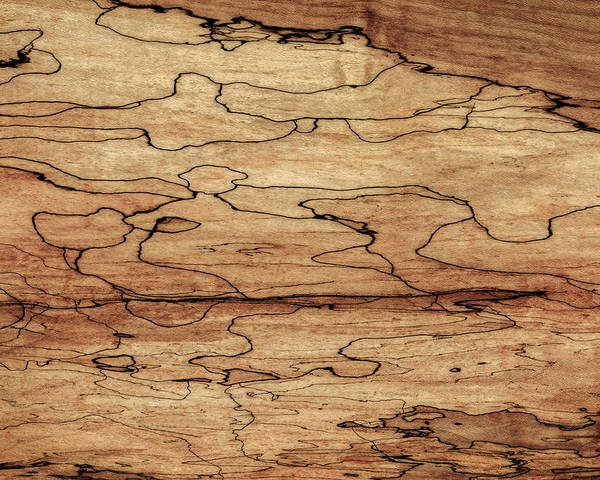 Sugar Maple Spalted Wood Grain Pattern Poster By Phil Cardamone