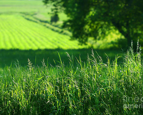 Agricultural Poster featuring the digital art Summer Fields Of Green by Sandra Cunningham