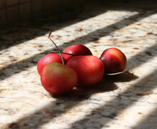 Cherry Poster featuring the photograph Summer Fruit by Sherry Klander