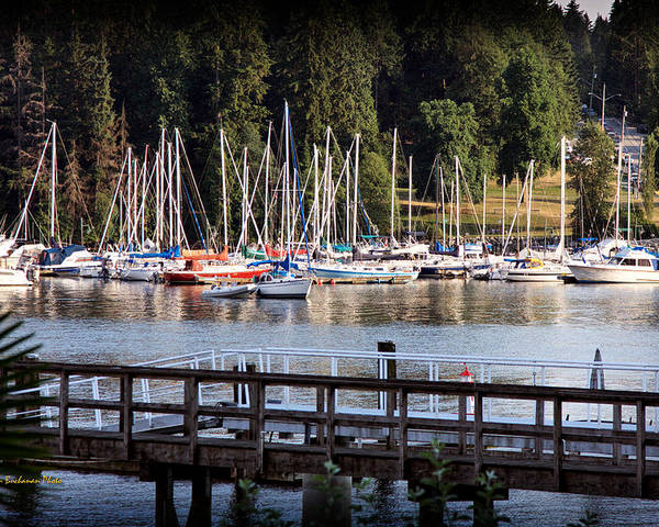 Deep Cove Poster featuring the photograph Summer In Deep Cove by Tom Buchanan