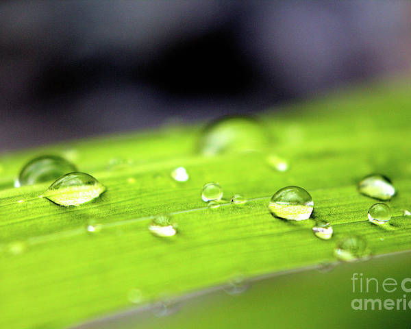 Rain Poster featuring the photograph Summer Rain 2 by Victor K