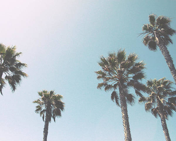 Palm Trees Poster featuring the photograph Summer Sky- By Linda Woods by Linda Woods