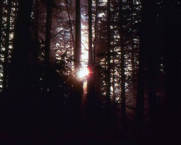 Abstract Poster featuring the photograph Sun In The Forest by Lyle Crump
