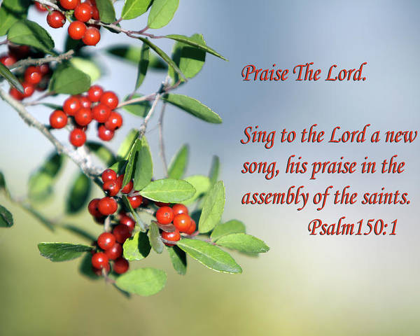 Scripture Poster featuring the photograph Sun Lite Pyrocanthia Berries Ps. 150 V 1 by Linda Phelps