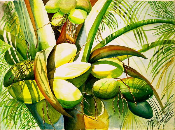 Trees Poster featuring the painting Sunlit Coconuts by Elizabeth Ferris