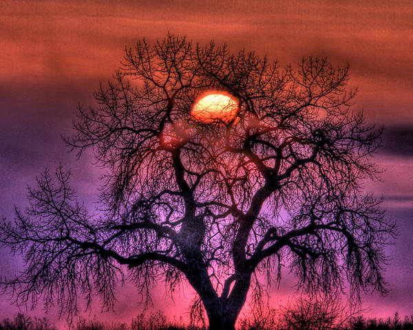 Sunrise Poster featuring the photograph Sunrise Through The Foggy Tree by Scott Mahon