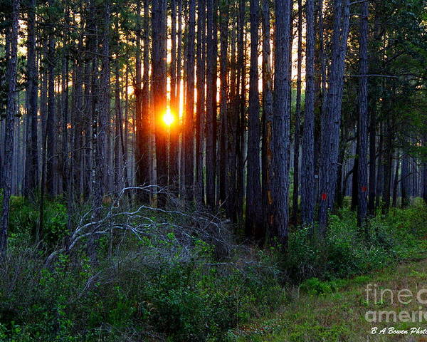 Sunset Poster featuring the photograph Sunset Along The Florida Trail - St.marks by Barbara Bowen