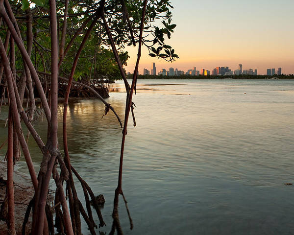 Miami Poster featuring the photograph Sunset At Miami Behind Wild Mangrove Forest by Matt Tilghman