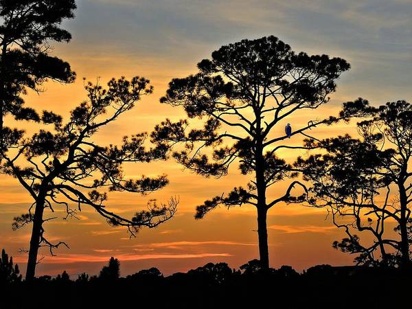Landscape Poster featuring the photograph Sunset For One by Laura Ragland