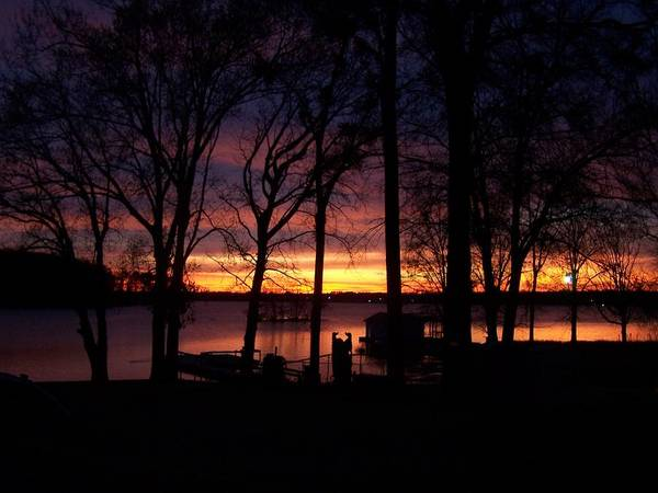 Sunset Poster featuring the photograph Sunset Thru The Trees by Tish Kennedy