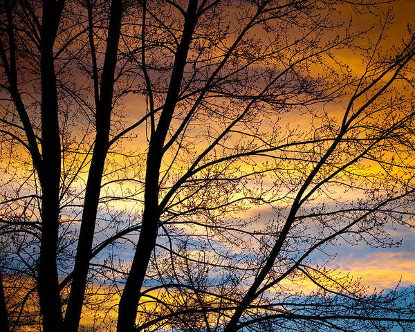 Canvas Print Poster featuring the photograph Sunset Tree Silhouette by James BO Insogna