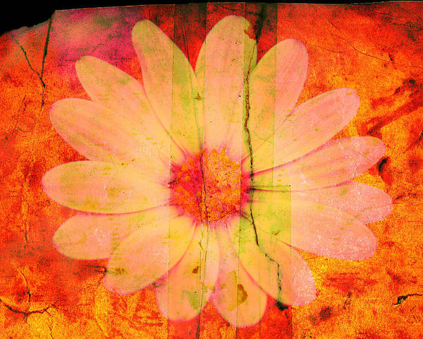 Flower Poster featuring the photograph Surprise Me by Susanne Van Hulst