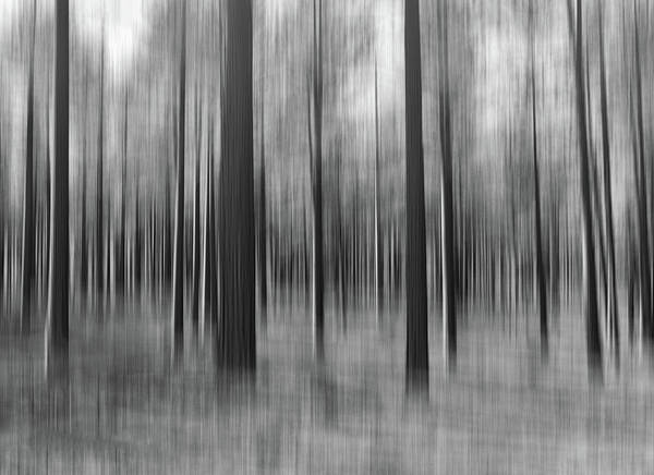 Tree Poster featuring the photograph Surreal Forest Abstract. by Greg Chapel