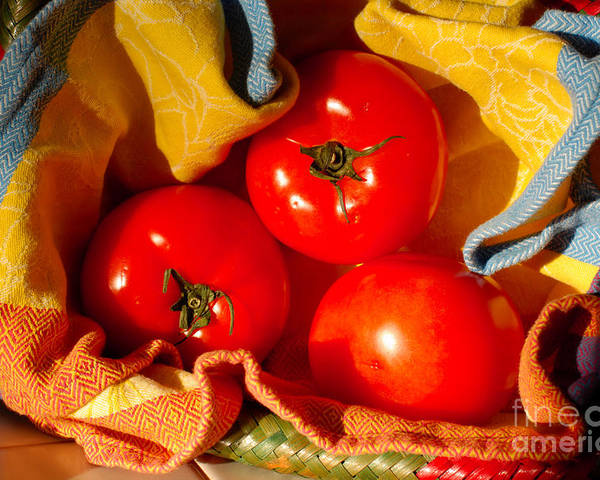 Tomatoes Poster featuring the photograph Swaddled Tomatoes by Andrea Simon