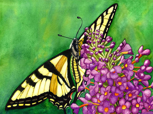 Butterfly Poster featuring the painting Swallowtail 1 by Catherine G McElroy