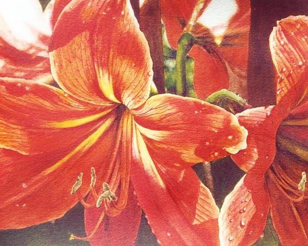 Flower Poster featuring the painting Sweet Amaryllis by Marion Hylton