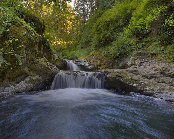 Sweet Creek Falls Trail Complex Poster featuring the photograph Sweet Little Waterfall by David Gn