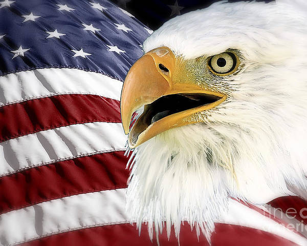 Bald Eagle Poster featuring the photograph Symbol Of America by Teresa Zieba