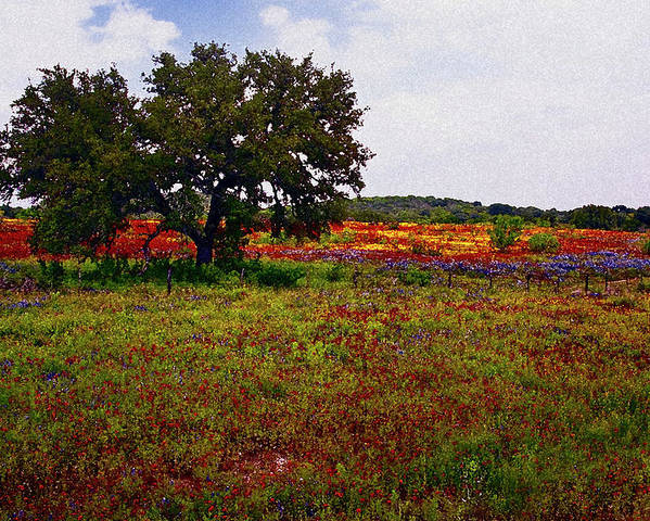 Texas Poster featuring the photograph Texas Wildflowers by Tamyra Ayles
